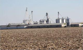 Industrial Hog Farm
